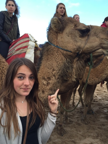 Oh look, it's a camel!